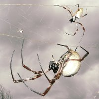 Mother and daughter living in the same web.  Cloudy day.